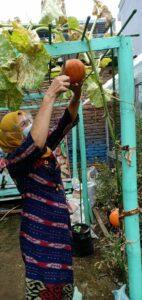 Kunjungan Kasi Monev Masyarakat Perkotaan BNN dengan Kepala Dinas Ketahanan Pangan Kota Makassar ke Kawasan Tanaman Hidroponik Di Kecamatan Panakkukang