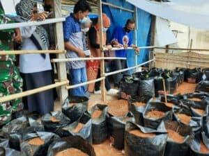 Melihat Tanaman Budidaya Jahe Merah Masyarakat Binaan di Pampang Panakkukang Kota Makassar