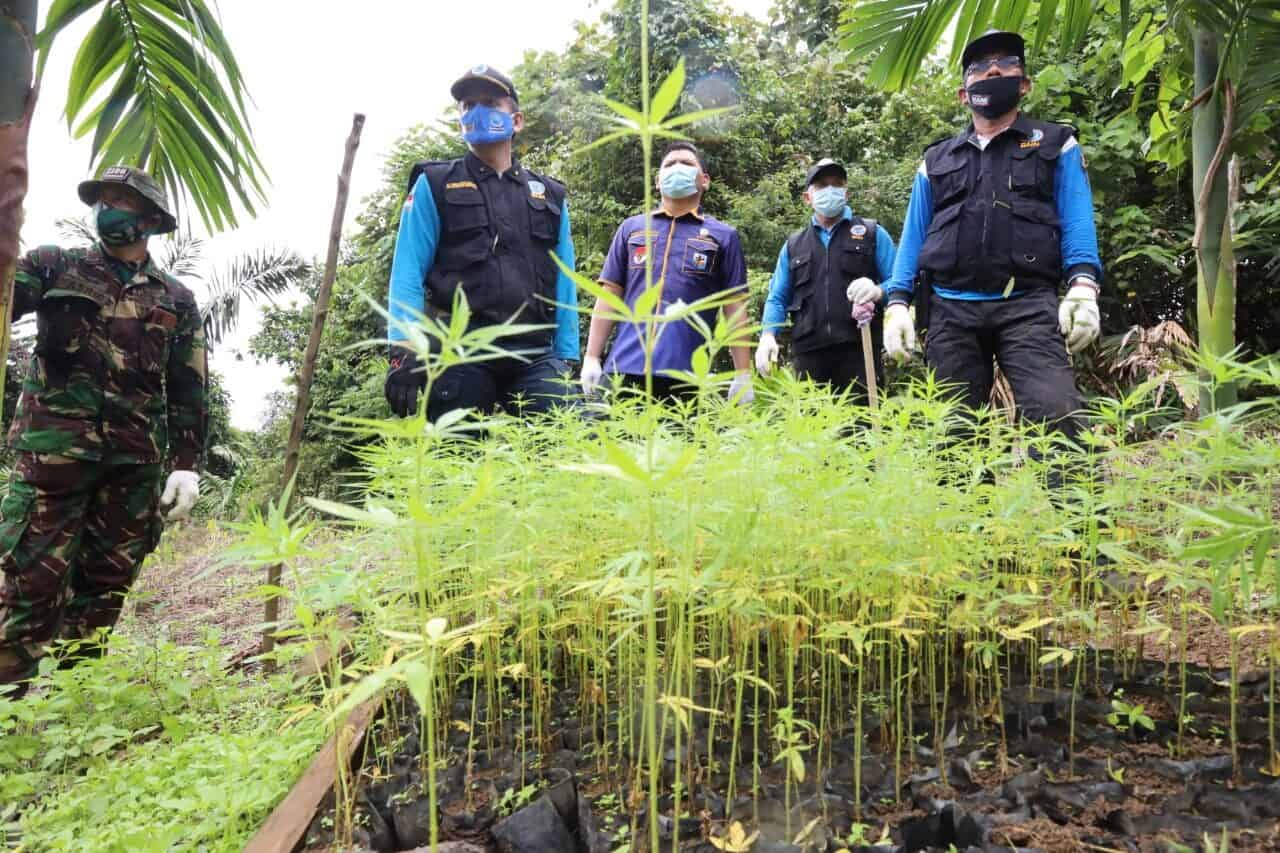BNN Gandeng KNPI Musnahkan Ladang Ganja Sebagai Upaya Gerakan Kepemudaan