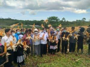 Panen Jagung Hibrida GDAD, BNN bersama Dinas Pertanian Provinsi Aceh, Dinas Pertanian Kab. Aceh Besar dan Owner PT Golden Daru Utama (GDU)