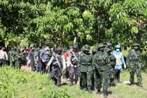 Pemusnahan Ladang Ganja 2 Hektar Oleh BNN RI